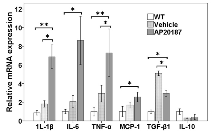 Relative gene expression after systemic depletion of circulating BM-derived microglia. Quantification of gene expression changes by qRT-PCR at P60 (4 weeks after being treated with AP20187 or vehicle; n =3 in each group), expressed as mean fold change in comparison with wild type (WT) ± 1 s.d., showing a trend of downregulation of the gene encoding the anti-inflammatory cytokine TGFβ1, and upregulation of genes encoding the inflammatory cytokines IL-1β, IL-6, TNFα and monocyte chemotactic protein (MCP-1). Asterisks indicate significant difference: * P