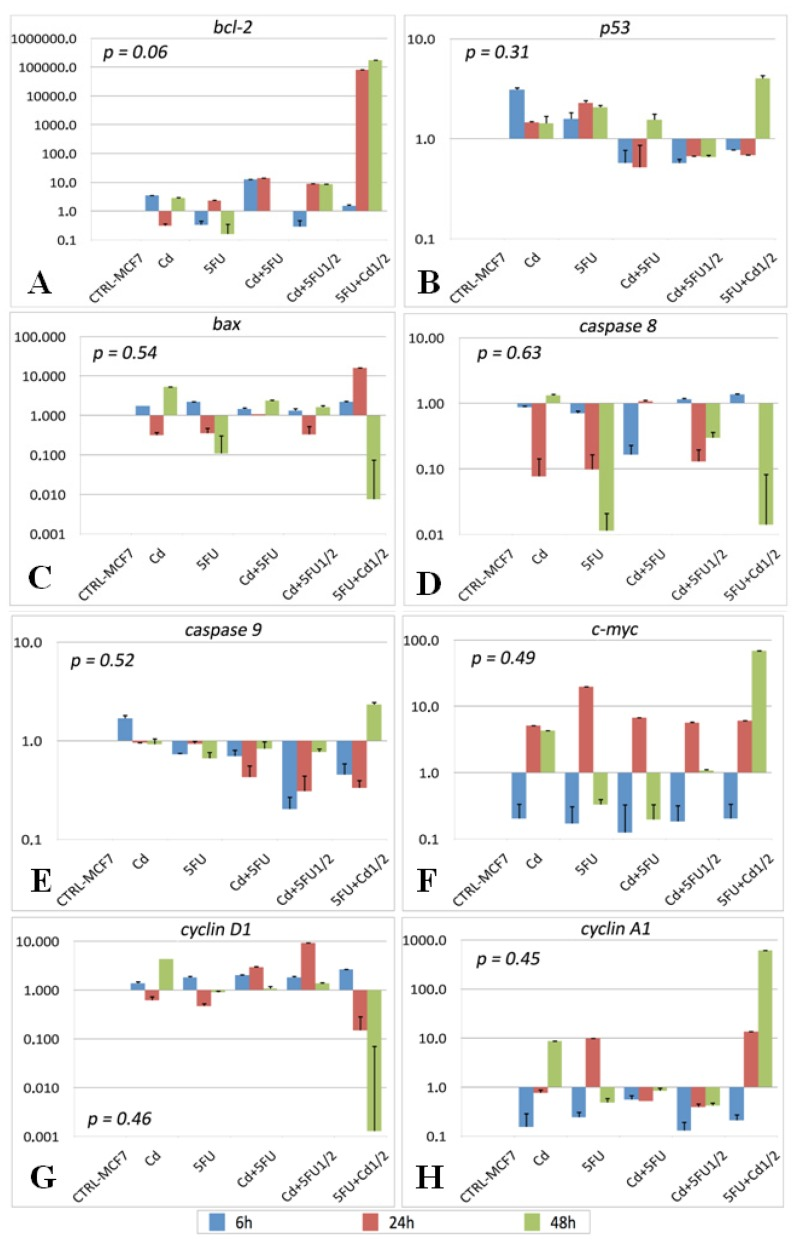 Determination by qRT-PCR of gene expression after treatment with Cd and/or 5-FU for 6, 24, or 48 h. The fold-increase in expression was quantified after normalizing expression levels for those in control MCF-7 cells. Gene expression of bcl-2 ( A ); p53 ( B ); bax ( C ); caspase 8 ( D ); caspase 9 ( E ); c-myc ( F ); cyclin D1 ( G ); cyclin A1 ( H ).