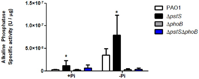 The effect of pstS and phoB deletion on phosphate starvation in P.aeruginosa . PAO1, Δ pstS , Δ phoB and Δ pstS Δ phoB were grown for 24 hours at 37°C on swarming plates containing M9 or phosphate-depleted M9. After 24 hours, bacteria were scraped off the plates and Alkaline Phosphatase activity was measured using p-Nitrophenyl Phosphate as described in Materials and Methods. Results were normalized to each samples' total protein concentration using Bradford assay. Results shown represent mean+standard deviation of six different experiments. Each experiment was performed in triplicate. Asterisks represent the significant rise in AP activity compared to the WT (p