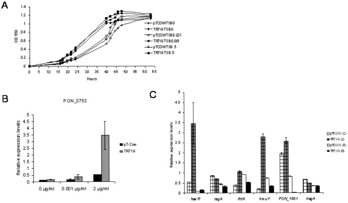 The functional HK from strain W83 restores growth defects of ATCC 33277. A. Growth of strains under hemin-deplete and replete conditions (0, 0.001, and 0.5 µg/ml, respectively: n = 3). B. Expression of RR PGN_0753 in ATCC 33277/pTCOW and TR719 in hemin-deplete, -limited, and -replete conditions measured by QRT-PCR. C. Expression of genes involved in iron/hemin transport in ATCC 33277/pTCOW and transconjugant TR719 grown under hemin- depleted and replete conditions. Data were obtained by QRT-PCR. PGN_1681: ATP-transporter ATP-binding protein.