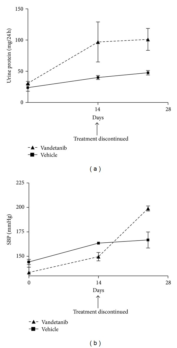 Systolic blood pressure (SBP) and proteinuria in nondiabetic Ren-2 rats treated with vehicle or vandetanib for 14 days and then observed for further 10 days. The graphs illustrate that the development of proteinuria with vandetanib precedes the rise in SBP.