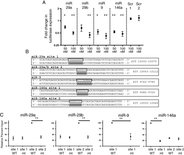 miRs-29a, -29b, -9 and -146a reduce expression of a luciferase reporter and target predicted binding sites in the 3′ UTR of SIV. (A) SIV nef / U3 - R was cloned into psiCHECK2 plasmid (Promega). 293T cells were co-transfection with 50 nM or 100 nM of each miRNA or scrambled mimic and 100 ng of either psiCHECK+SIV or psiCHECK alone. Control samples were transfected with either psiCHECK or psiCHECK+SIV, and no miRNA mimics. Cells were harvested 24 hours after transfection. Data shown is an average of four experiments and represents miRNA effect on luciferase expression for psiCHECK+SIV over psiCHECK only. (B) WT and mutant biotin-labeled oligos corresponding to SIV RNA sequences containing predicted miRNA binding sites. WT oligo is show on top and mutant on bottom. Boxed bases on WT oligo denote miRNA seed binding site in SIV sequence. Mutant oligo highlighted bases denote the change in seed-binding region. Annotation is based on SIV sequence AY033146. (C) 100 pmol of individual WT or mt oligos were transfected into HeLa cells and lysates collected 24 hours after transfection. Oligos were pulled down using Streptavidin beads and assayed for binding to endogenous cellular miRNAs using Taqman RT-qPCR. Percent input was calculated for each sample (see methods) and data presented as (% input mt )/(% input WT) with % of input of WT set to 100%. In each experiment, the value of the oligo which pulled down the highest percentage of individual endogenous miRNA was set to 100% and binding by other oligos was compared to this value. Data shown is an average of 4 experiments. Statistics represent the comparison of percent of miRNA bound to WT oligo compared to percent of miRNA pulled down by corresponding mt oligo and are reported as a two-tailed t test assuming unequal variance.