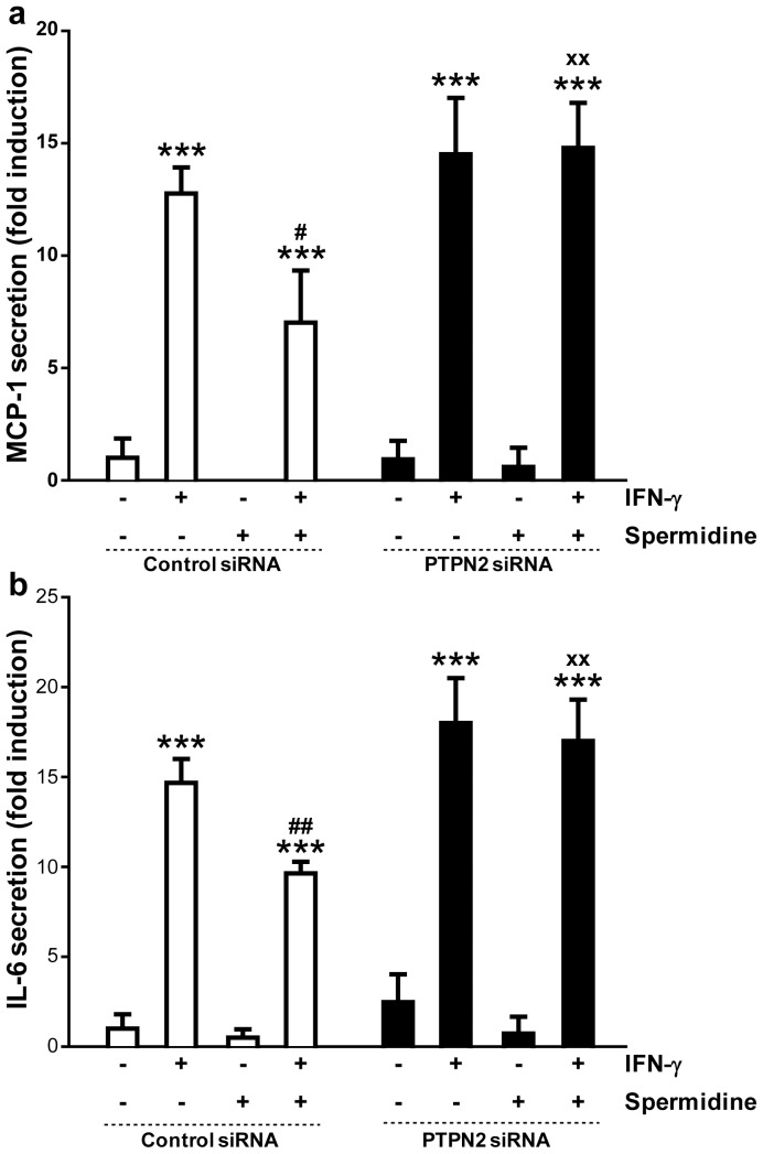 Effect of protein tyrosine phosphatase non-receptor type 2 (PTPN2) knockdown on cytokine signaling in human monocytic THP-1 cells treated with interferon-gamma (IFN-γ) and/or spermidine. THP-1 cells were transfected with either nonspecific small interfering RNA (siRNA) or ptpn2 siRNA. The graphs show secretion levels of ( a ) monocyte chemoattractant protein (MCP)-1, and ( b ) interleukin (IL)-6 in THP-1 cells treated with IFN-γ (1000 U/ml) and/or spermidine (100 µM) for 24 h (n = 3). Data are expressed as fold induction respect to untreated cells transfected with non-specific siRNA. Significant differences compared to untreated (*** = p