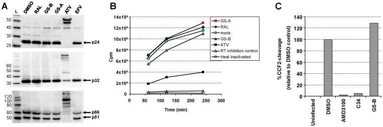 NCINIs do not inhibit Gag-Pol processing, ERT, or target cell entry. ( A ) Western blot analysis of purified HIV-1 particles produced in the presence of different inhibitors at 1 µM concentration. Gag/Gag-Pol processing was assessed using anti-CA ( upper ), anti-IN ( middle ), and anti-RT antibodies ( lower ). ( B ) Equal p24 amounts of virus shown in A were analyzed for virion-associated endogenous reverse transcriptase activity. Values were averaged from duplicate measurements. ( C ) Percentage of cells positive for beta-lactamase activity following infection with Blam-Vpr complemented HIV-1 produced in the presence of DMSO or 1 µM tested compounds. Values are normalized to DMSO-treated control and represent a mean of two independent experiments performed in duplicate.