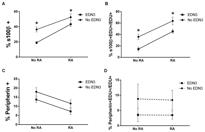 RA increases S100β+ and decreases peripherin+ cell prevalence while EDN3 decreases S100β+ cell prevalence. p75 NTR + cells were grown for 72 hours in the presence of RA, EDN3, RA with EDN3, or neither compound. When EDN3 was absent, the EDN signaling inhibitor BQ-788 was added to inhibit endogenous EDNRB signaling. The proportion (A and C) and proliferating fraction (B and D) of peripherin- and S100β-immunoreactive cells were quantified. Solid lines denote a statistically significant difference (p