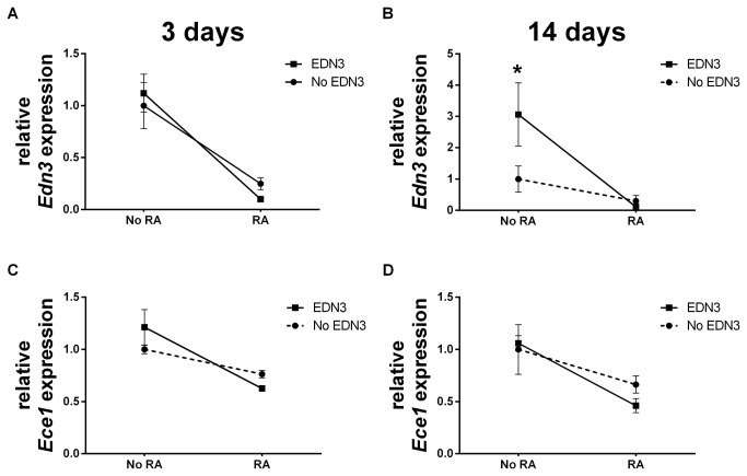 RA decreases EDN3 and Ece1 mRNA levels, depending on whether exogenous EDN3 is present. p75 NTR + cells were grown for 72 hours in the presence of RA, EDN3, RA with EDN3, or neither compound. When EDN3 was absent, the EDN signaling inhibitor BQ-788 was added to inhibit endogenous EDNRB signaling. Relative EDN3 (A-B) and Ece1 (C-D) mRNA levels were measured by quantitative RT-PCR after 3 (A, C) and 14 (B, D) days. Levels are normalized to β-actin and the -RA/-EDN3 condition was standardized to a value of 1. Solid lines denote a statistically significant difference (p