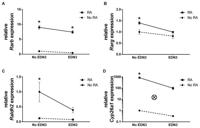 EDN3 is associated with decreased levels of RA receptor mRNA and RA metabolic enzyme mRNA. p75 NTR + cells were grown for 72 hours in the presence of RA, EDN3, RA with EDN3, or neither compound. When EDN3 was absent, the EDN signaling inhibitor BQ-788 was added to inhibit endogenous EDNRB signaling. Relative Rarb (A), Rarg (B), Raldh2 (C), and Cyp26a1 (D) mRNA levels were measured by quantitative RT-PCR. Levels are normalized to β-actin and the -RA/-EDN3 condition was standardized to a value of 1. Solid lines denote a statistically significant difference (p