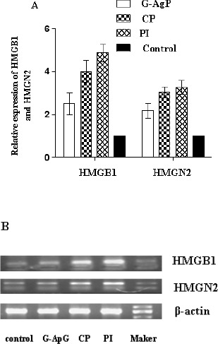 The relative expression of <t>HMGB1</t> and HMGN2 mRNA in gingival tissues from the patients in CP, G-AgP and healthy groups. A. Values were presented as mean ± SD for at least three independent experiments performed in triplicate. The expressions of HMGB1 and HMGN2 in control group were normalized in 1.0. B. Representative RT-PCR images for HMGB1 and HMGN2 in four groups.