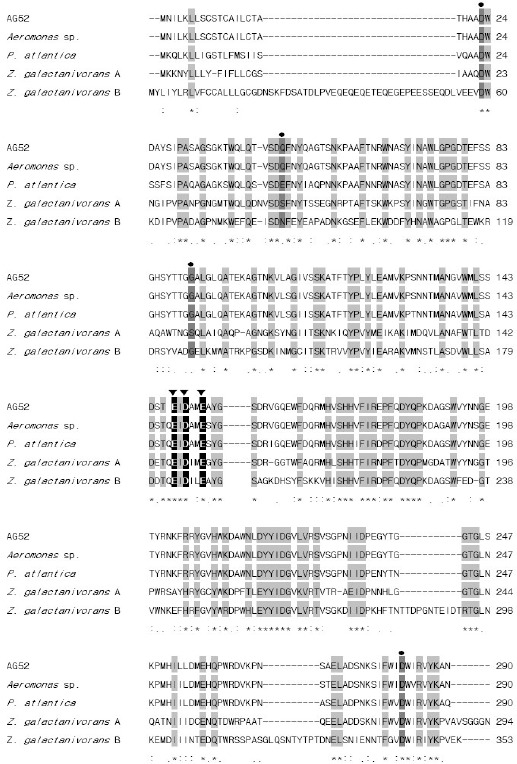 Multiple alignment of β-agarase amino acid sequences of Pseudoalteromonas sp. AG52 with known agarases. The inverted triangles (▼) highlight the conserved catalytic residues, and black circles (●) represent the conserved residues involved in calcium ion binding. Identical residues in all sequences are shaded in gray and indicated by (*) under the column, conserved substitutions are indicated by (:), and semi-conserved substitutions are indicated by (.). Deletions are indicated by dashes. Sequence sources: Aeromonas sp. β-agarase (AAF03246), Pseudoalteromonas atlantica β-agarase I (AAA91888), Zobellia galactanivorans β-agarase A (AAF21820), Zobellia galactanivorans β-agarase B (AAF21821).