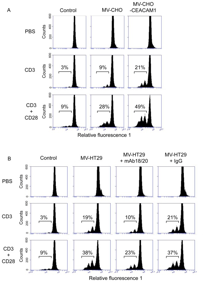 CEACAM1-positive MVs significantly increase the anti-CD3 and anti-CD3/CD28 mAb triggered T-cell proliferation. Freshly isolated human PBMC were labeled with CFSE and cultured for 4 days in the presence of anti CD3 and anti CD3/CD28 with and without CHO- and CHO-CEACAM1 derived MVs (A). B) CFSE labeled PBMC were cultured for 4 days in the presence and absence of antiCD3 and antiCD3/CD28 with and without HT29-derived MVs. Untreated treated cells served as control. In indicated cases samples were co-cultured with antiCEACAM1 mAb18/20 (50 µg/ml) or isotype matched control IgG (50 µg/ml). Then PBMCs were analyzed utilizing the Accuri C6 flow cytometer system. The histograms depict PBMCs that have divided 1-3 times based on CFSE dilution peaks and reflex the cell proliferation rate given in %. The data shown are representative for three independent repeats of the experiment.