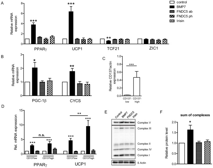 BMP7 activates the brite fat gene program in human adipocytes, but not FNDC5 and irisin. Isolated preadipocytes from human subcutaneous preadipocytes of different donors were differentiated in the presence of 50/ml BMP7, 200 ng/ml FNDC5 (Abnova), 200 ng/ml FNDC5 (Phoenix) and 60 ng/ml irisin (Phoenix). (A) Relative gene expression of PPARγ, UCP1, TCF21 and ZIC1 was measured by qRT-PCR after 12–14 days of differentiation. All expression data were normalized to actin; n≥4; ***p