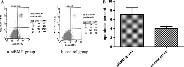 a BMI1 knockdown enhanced the apoptosis of T24 cells. Apoptotic cells of different groups were measured by flow cytometry after 48 h transduction. The cell populations of Annexin-V +/PI− and Annexin-V +/PI+ were used to assess apoptotic events. ( a ) BMI1 siRNA group, ( b ) control group. b The apoptosis rate of BMI1 siRNA group cells was significantly higher than that of control group cells. p