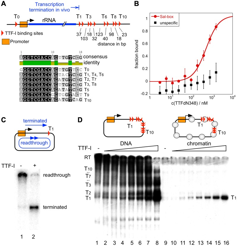 Chromatin-specific termination at the homotypic cluster of <t>TTF-I.</t> (A) Overview of the murine rRNA gene and the location of the TTF-I binding sites. A homotypic cluster of TTF-I sites is located in the terminator region. The distances between TTF-I binding sites, their orientation and the gene promoter are indicated. A comparison of the TTF-I binding sites T 0 and the termination sites T 1 to T 10 is depicted. (B) Increasing amounts of TTF-IΔN348 were incubated with 50 nM of either a fluorescently labelled 30-mer oligonucleotide containing a Sal-box motif (T 2 ) or a control oligonucleotide of the same length. Protein-DNA interactions are quantified by microscale <t>thermophoresis.</t> Curve fitting with a Hill coefficient of 1 resulted in a K D of 500 nM+/−120 nM for the T 2 sequence. (C) Transcription reaction using the circular rDNA minigene plasmid pMr-SB containing a single termination site, a partially purified nuclear extract lacking most of the nuclear TTF-I (DEAE280), performed in the presence or absence of recombinant TTF-I. The positions of the long read-through and the terminated transcripts are indicated. (D) Transcription on free DNA and chromatin, using the pMrWT-T DNA containing the promoter with the TTF-I binding site T 0 and the full terminator with the 10 termination sites. DNA (lanes 1–8) and chromatin (lanes 9–16) were incubated with increasing concentrations of TTF-I as indicated and the DEAE280 extract. The position of the long, non-terminated read-through transcript (RT) and the terminated transcripts are indicated.