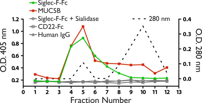 Siglec-F ligands in BAL fluid. A, fractions of BAL fluid assayed by ELISA using Siglec-F-Fc ( filled circles ), or anti-MUC5B ( filled squares ). Total protein was determined by measuring absorbance at 280 nm ( dotted line ). No signal was observed when wells were reacted with CD22-Fc ( open squares ), human IgG ( open triangles ), or treated with sialidase before incubation with Siglec-F-Fc ( open circles ). Results are representative of two independent experiments.