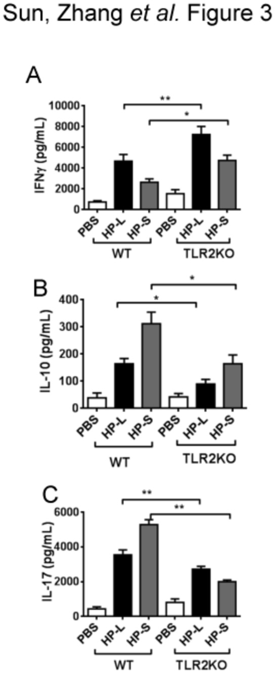 H. pylori –stimulated TLR2KO BMDCs induced a skewed Th1 response. BMDCs from WT mice and TLR2KO mice were stimulated with a blank control, live H . pylori (HP-L), or H . pylori sonicate (HP-S). DCs (1 × 10 5 cells/well) were prepared 18 h after H . pylori infection and cocultured with naive syngeneic splenocytes (1 × 10 6 cells/well) for 72 h at a splenocyte-to-DC ratio (10:1). Supernatants were collected and protein expression was measured by ELISA. The secretion of IFN-γ ( a ) was higher, whereas the secretion of IL-10 ( b ) and IL-17A ( c ) was lower in TLR2KO mice than in WT mice ( * P