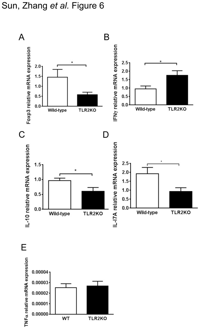 Reduced Th17/Treg and increased Th1 responses in H. pylori –infected TLR2KO mice. After an H . pylori (10 9 CFU/mL) infection of 2 months duration, stomachs from WT mice and TLR2-deficient mice were removed. mRNA expression of Foxp3 ( a ), IFN-γ ( b ), IL-10 ( c ), IL-17A ( d ), TNF-α ( e ) and the housekeeping gene GAPDH were measured by quantitative PCR (n = 10 mice per group; * P