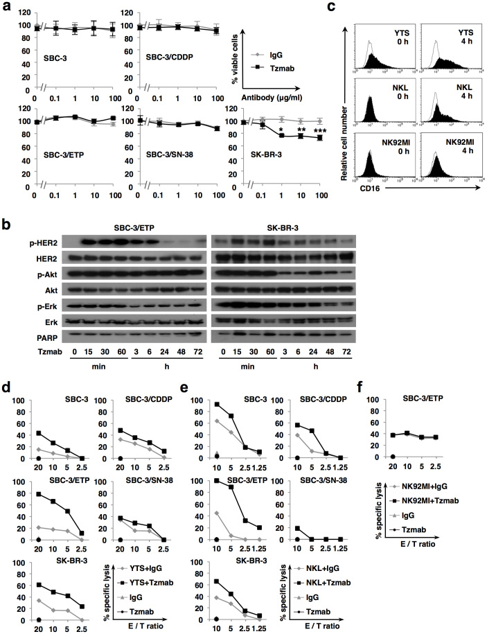 Antitumor activity of trastuzumab does not depend on direct inhibition of HER2 signaling but rather on ADCC in HER2-positive SCLC cells. (a) HER2-positive SCLC cells (SBC-3, SBC-3/CDDP, SBC-3/ETP, and SBC-3/SN-38 cells) and HER2-overexpressing breast carcinoma cells (SK-BR-3 cells) were treated with 10 μg/ml of normal human IgG or trastuzumab (Tzmab) for 72 h. The relative numbers of viable cells were quantified using the CCK-8 assay. Points, mean% viable cells; bars, SD of at least three independent experiments performed in triplicate; *, P = 0.018; **, P = 0.004; ***, P = 0.002. (b) SBC-3/ETP and SK-BR-3 cells were treated with 10 μg/ml of trastuzumab for up to 72 h. Phosphorylation and expression of HER2, Akt, and Erk in whole cell lysates were examined by immunoblotting. PARP was also examined to detect <t>apoptosis.</t> Each lane of SBC-3/ETP and SK-BR-3 cell lysates contains 60 μg and 30 μg of total protein, respectively. Representative blots from three independent experiments with similar results are shown. Blots are cropped in the figure and full-length blots are presented in Supplementary information . (c) Induction of CD16 expression on NK cells. NK cells (YTS, NKL, and NK92MI cells) were treated with or without 10 μg/ml of trastuzumab for 4 h. Then, the cells were labeled with an anti-CD16 monoclonal Ab (black shaded) or isotype-matched control (solid line) and analyzed for cell surface expression of CD16 by FACS. (d), (e), and (f) Evaluation of trastuzumab-mediated ADCC. Target cancer cells and effector NK cells were coincubated at various E/T ratios with 10 μg/ml of normal human IgG or trastuzumab (Tzmab) for 4 h. Cytotoxic activity was determined based on the LDH release assay. Representative data from at least three experiments are shown as the means of triplicate cultures.