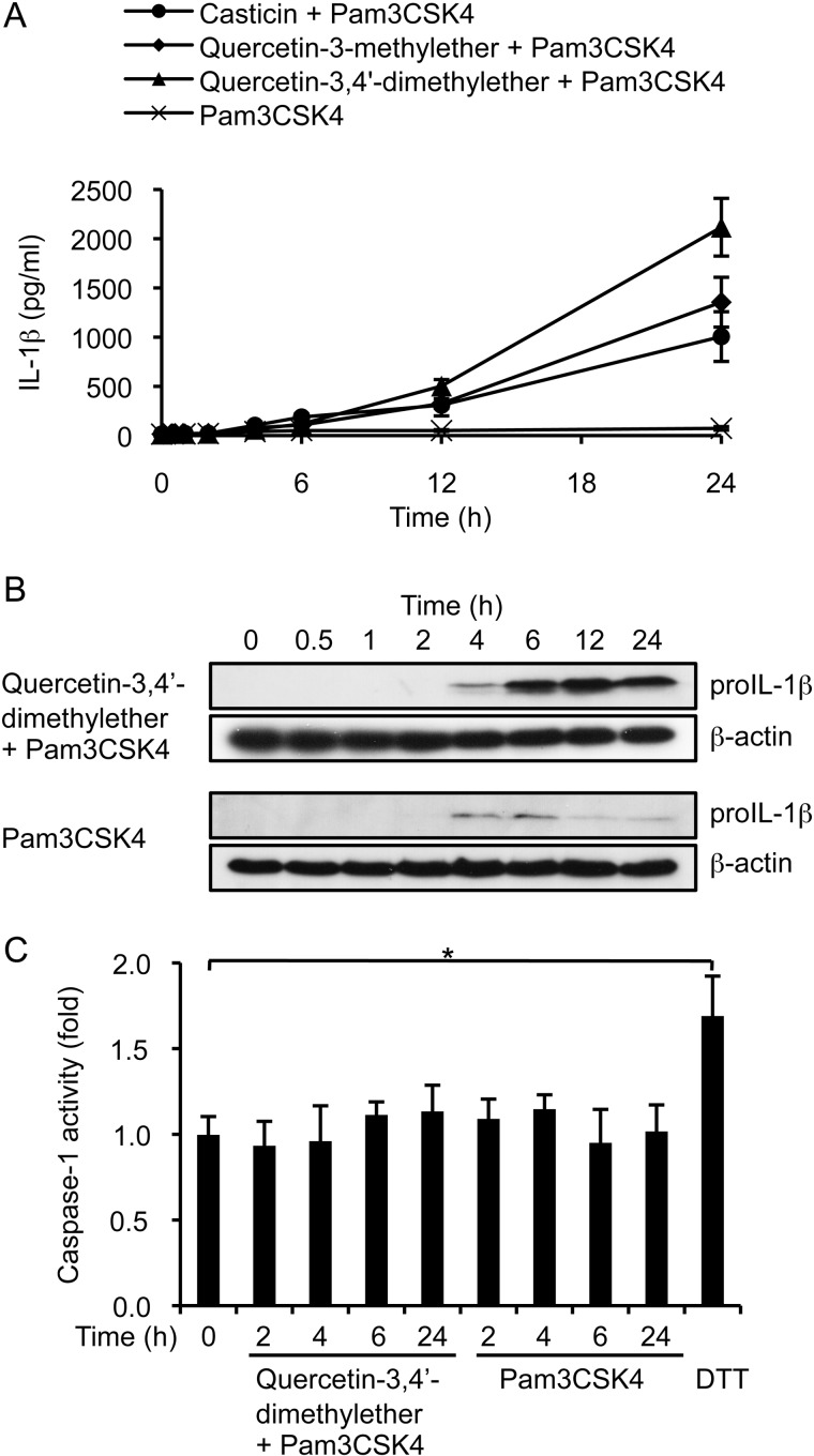 3- O -Methylated flavonols do not increase caspase-1 activity in THP-1 cells. A , levels of IL-1β secreted into culture media by cells stimulated with Pam3CSK4 and 10 μ m methylated flavonol. B , Western blot analysis of proIL-1β levels in cell extracts after stimulation. β-Actin was used as the loading control. C , caspase-1 activity in cell extracts after stimulation. Fold-change in caspase-1 activity was determined by comparing the level found in stimulated cells with those of non-stimulated cells. Cells treated with 10 m m DTT at 37 °C for 1 h were used as a positive control. Data in A and C are expressed as the mean ± S.D. from three independent experiments. *, p