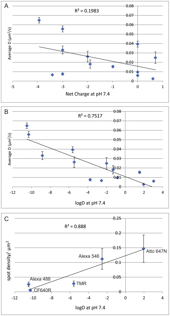 Effect of logD and charge on affibody conjugate mobility. Plots of mean instantaneous D fit for different anti-EGFR Affibody conjugates vs charge at pH 7.4 ( A ), and logD ( B ). C) Plot of spot density for selected anti-EGFR Affibody conjugates vs charge at logD. Each datapoint corresponds to mean ± SEM of at least 10 independent areas. Lines show linear regression fit to the data, R 2 values indicating goodness of fit. Alexa 555 is not included in this figure as the structure is not published and charge and logD values are unavailable.