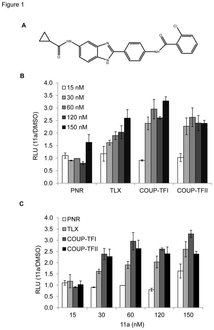 The effect of 11a on PNR, TLX, COUP-TFI and COUP-TFII activation of the DR2-luciferase reporter. (A) Chemical structure of 11a. HEK293T cells transfected with the indicated constructs were treated in triplicate with 0.1% DMSO, 15 nM, 30 nM, 60 nM, 120 nM or 150 nM 11a. Data are expressed as relative luciferase units normalized to the DMSO control ± SD. (B) Comparison between different nuclear receptors with increasing 11a concentrations. (C) Comparison between various doses of 11a with different nuclear receptors.