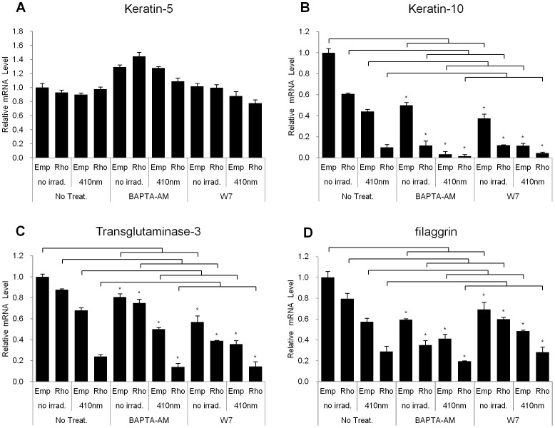BAPTA-AM and W7 had no significant effects on the expression levels of the differentiation markers in rhodopsin-over-expressed NHEKs. NHEKs were cultured and then treated with BAPTA-AM (10 mM) or W7 (40 mM) 1 hr before irradiation. The cells were incubated for 24 hr after irradiation with 410 nm wavelength light for 60 min. Q-RT-PCR was performed to assess the expression of (A) keratin-5, (B) keratin-10, (C) transglutaminase-3, and (D) filaggrin. The data are representative of at least three independent experiments. The values represent the mean ± SEM of the mRNA expression corresponding to the various genes relative to control which are normalized to human RPL13A expression (n = 3 independent cell lines in triplicate) *p