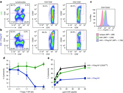 In vitro restimulation of PBMC with Tregitopes results in the expansion of a population of suppressive CD4 + CD25 + T cells . Flow cytometry plots of PBMC restimulated in vitro with the AAV MHC I epitope VPQYGYLTL alone (AAV) ( a ) or with Tregitope 167 (AAV+hTreg167) ( b ). Cells were gated on lymphocytes after live/dead exclusion, CD3 + T cells, and CD4 + CD8 - and CD4 - CD8 + T cells were analyzed for CD25 + . ( c ) Histogram plot showing FoxP3 expression on CD4 + CD25 + T cells restimulated with AAV-only from (a) or AAV+hTreg167 from (b); the isotype control is shown in red. Mean fluorescent intensity (MFI) is indicated in the figure legend. ( d ) Suppression experiments in which CD4 + T cells (Tsupp) negatively isolated from PBMC restimulated in vitro with AAV+hTreg167 (blue line) or with AAV only (green line) were mixed at defined ratios with CD8 + Teff negatively isolated from PBMC restimulated in vitro with the AAV only. ( e ) CTL assay in which Teff were derived from PBMC restimulated in vitro with AAV alone (AAV) or with Tregitope 167 (AAV+hTreg167). Alternatively, PBMC were depleted of CD25 + T cells prior to AAV+hTreg167 restimulation (AAV+hTreg167 [CD25 neg ]). Teff:target ratio 10:1. Results are expressed as % cytotoxicity compared to a max cytotoxicity (cells treated with 10% SDS) after background subtraction. Experiments shown were repeated at least twice. Error bars represent SEM.