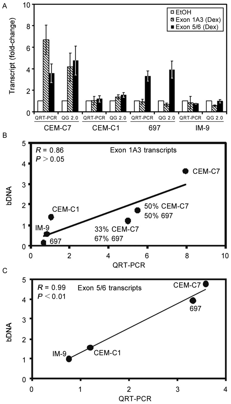 Measurements of GR transcript regulation in cell lines via the bDNA assay and QRT-PCR assays are correlated. A, cell samples were prepared from CEM-C7, CEM-C1, 697, and IM-9 cells treated for 18 h with 1 mol/L Dex or EtOH vehicle alone. CEM-7 is a glucocorticoid-sensitive T-cell ALL cell line and the CEM-C1 cell line was derived from CEM-C7 cells and they are resistant to steroid-mediated apoptosis. 697 is a pre-B-ALL cell line that is steroid-sensitive, whereas the IM-9 lymphoblastoid cell line is resistant to hormone-mediated apoptosis. Cells were lysed for the Quantigene assay using the manufacturer's lysis buffer and total cellular RNA samples were isolated from another aliquot of the culture for QRT-PCR using the Trizol® reagent. The average and SEM are shown for three separate experiments. The data are presented as the fold-change in GR transcript concentration as compared to the EtOH-treated control. For each cell line, there was no significant difference (via paired sample t-test) between QRT-PCR and QG 2.0 for the exon 5/6 measurements. The correlation between QRT-PCR and QG 2.0 when measuring the GC-mediated regulation of exon 1A3 transcripts (B) and exon 5/6 transcripts (C) was tested by calculating the correlation coefficient (R). Because the level of exon 1A3 transcripts was so much greater in CEM-C7 cells than in other cells, we mixed the higher expressing CEM-C7 cell extract with the lower expressing 697 cell extract to obtain points in the middle of the curve (B). The ratios of CEM-C7 extract to 697 extract was 1:1 (50% CEM-C7/50% 697) and 1:2 (33% CEM-C7/67% 697). NS denotes that the difference is not significant ( P > 0.05).