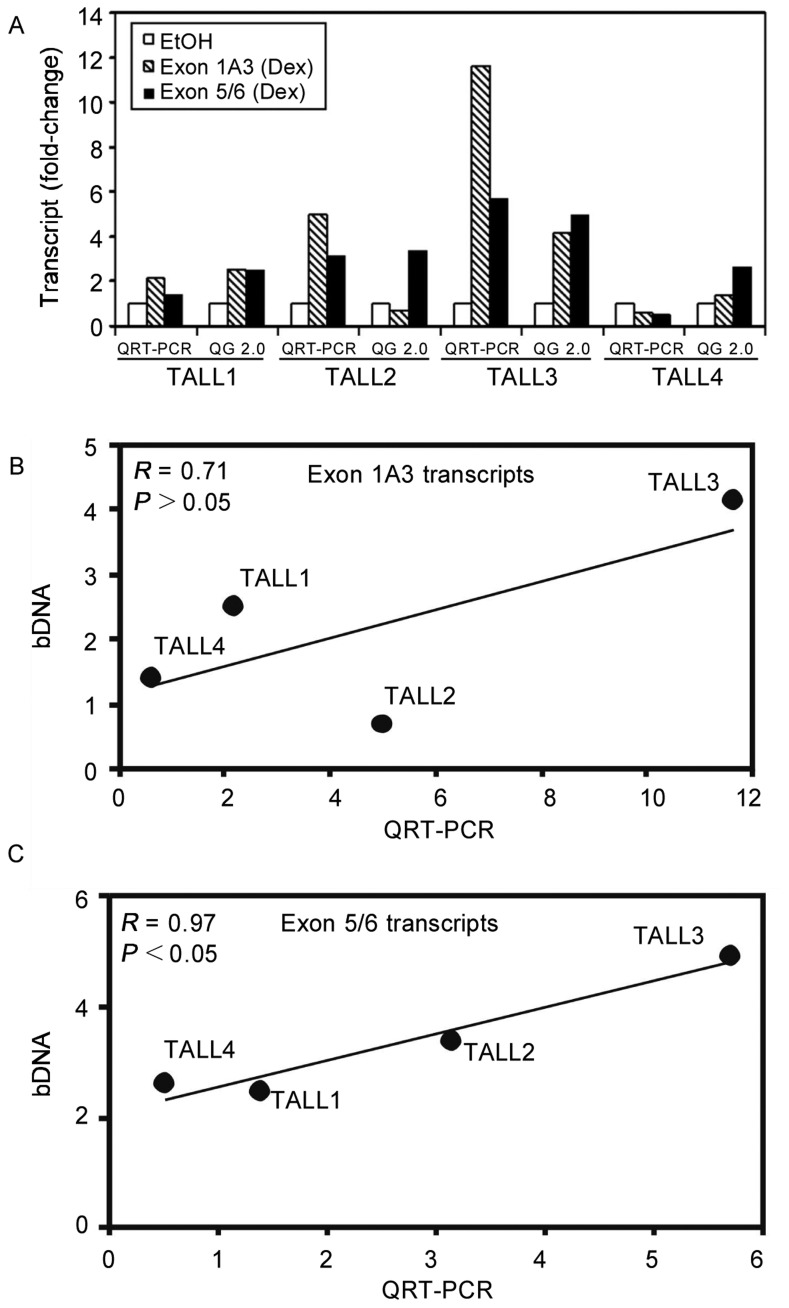 In patient samples, the bDNA and QRT-PCR assays are correlated only when measuring exon 5/6 transcripts. A, cell samples were prepared from TALL1, TALL2, TALL3, and TALL4 cells treated with 1 µ.mol/L Dex or EtOH vehicle alone for 18 h. The cells were lysed for the Quantigene assay using the manufacturer's lysis buffer and total cellular RNA was isolated from another aliquot of the culture for QRT-PCR using the Trizol® reagent. Each measurement was completed only once because of the low yield of material obtained from fresh patient samples. The data are presented as the fold-change in GR transcript concentration as compared to the EtOH-treated control. The correlation between QRT-PCR and QG 2.0 when measuring the GC-mediated regulation of exon 1A3 transcripts (B) and exon 5/6 transcripts (C) was tested by calculating the correlation coefficient ( R ).