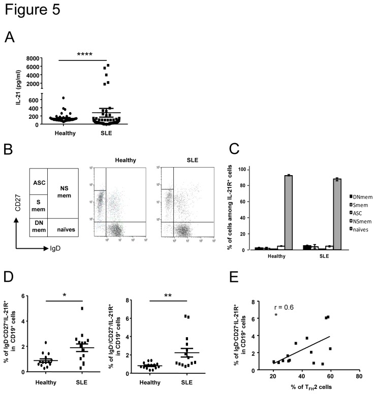The frequency of memory B cells expressing IL-21R is enhanced in SLE patients and correlates with T FH 2 cell increase. IL-21 concentration was measured in the serum of SLE patients (n = 88) and healthy controls (n = 44) by a sandwich ELISA assay (A). Results are expressed as the mean IL-21 concentration (pg/ml) from duplicate wells. Each data point represents an individual subject and horizontal lines show the mean ± sem. Circulating B cell subsets were defined according to the expression of IgD and CD27 on CD19 + IL-21R + cells allowing the definition of 5 populations: Ab-secreting cells (ASC), non switched memory cells (NSmem), switched memory cells (Smem) and double negative memory cells (DNmem). Representative dot plots obtained with samples from one healthy control and one SLE patient are shown as an example (B). The distribution of each B cell subset among IL-21R + cells in healthy controls (n = 14) and SLE patients (n = 14) is represented (C). The frequency of CD27 + memory (left) and DN memory (right) B cells expressing IL-21R is compared between healthy controls (n = 14) and SLE patients (n = 14). Correlation between the IL-21R + DN memory cells and T FH 2 cell subset frequencies in SLE patients (n= 14) is represented (E). Each data point represents an individual subject; horizontal lines show the mean ± sem. * p