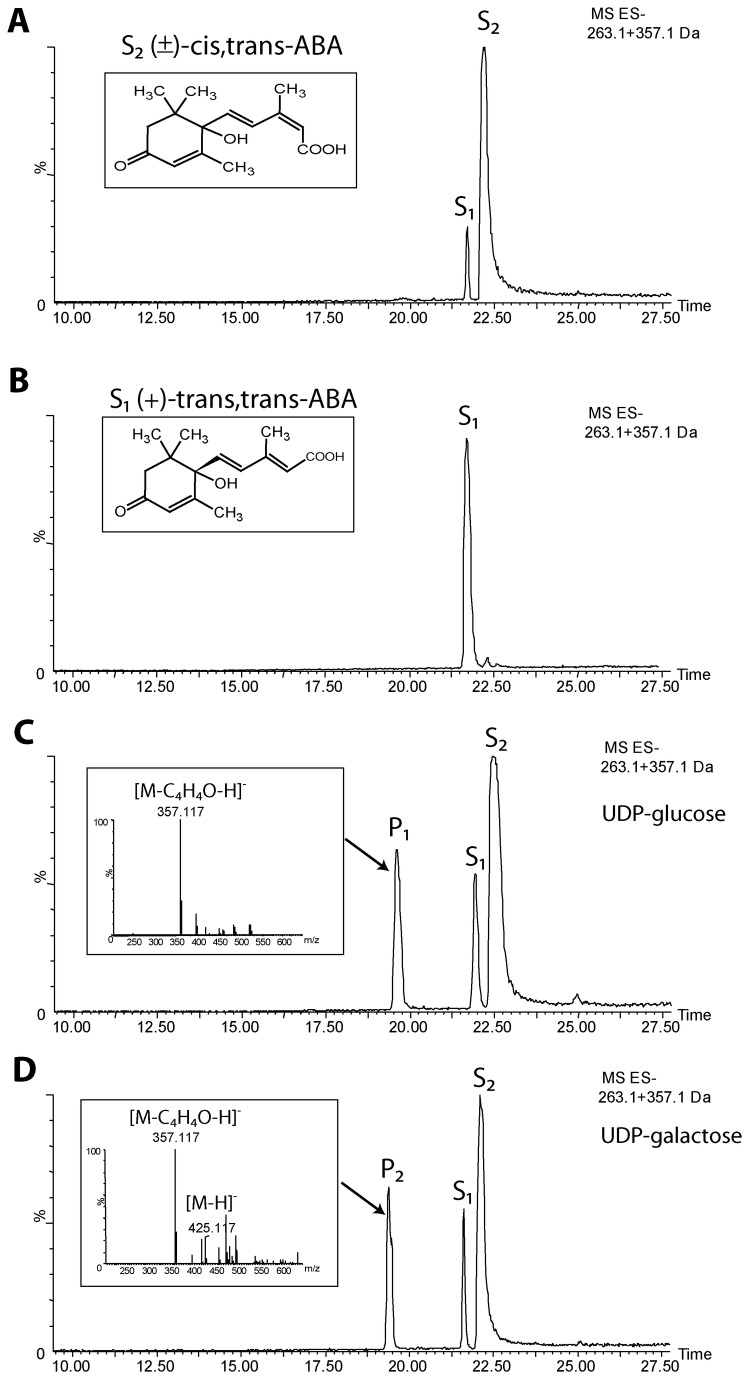 LCMS analysis of in vitro activity of UGT73C14 against ABA. Portions of negative LCMS extracted-ion chromatograms (m/z 263.1 + 375.1) show reaction products in the absence of enzyme (A) or with purified protein of UGT73C14 transferring UDP-glucose (C) or UDP-galactose (D) sugar-donors to the substrate acceptor - S. Panel B shows chromatogram of (+)-trans ,trans-ABA standard. S 1 peak represents trans,trans-ABA isoform and S 2 peak corresponds to mixture of (+)-cis,trans-ABA, whereas peaks of products P 1 and P 2 correspond to ABA-glucoside and ABA-galactoside, respectively. Insets represent MS spectra of ABA-glucoside (C) and ABA-galactoside (D).
