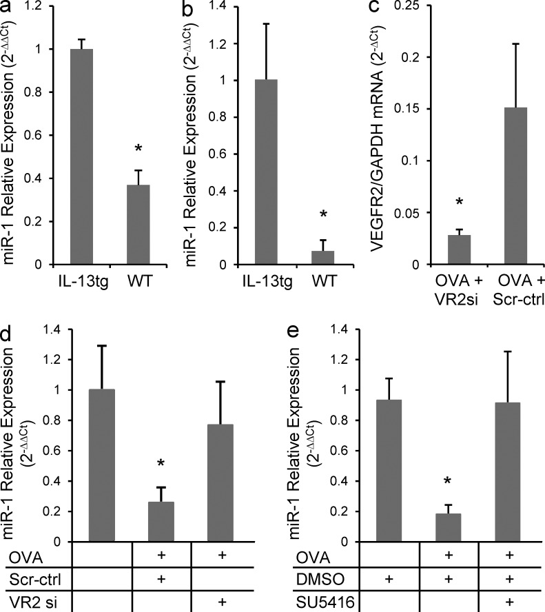 The effect of lung Th2 inflammation of VEGFR2 siRNA on miR-1 expression. (a) IL-13 expression was induced in the lung epithelium of CC10-rtTA-Il-13 transgenic mice for 7 d, and miR-1 expression was measured by TaqMan qRT-PCR in the whole lung RNA from these mice and their WT litters (values normalized to WT; three experiments; n = 3 or more in each group; *, P