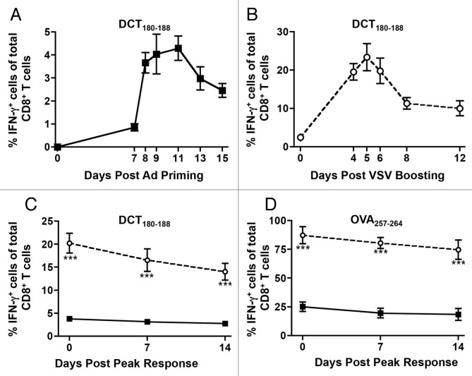 Quantitative assessment of adenovirus-primed and VSV-boosted CD8+ T cell responses. ( A ) C57BL/6 mice were primed by intramuscular injection of 1 × 108 plaque-forming units (PFUs) of Ad-hDCT. Blood samples were drawn on various days post-priming to quantify CD8+ T-cell response to the immunodominant epitope DCT180–188 by cytofluorometric detection of intracellular interferon γ (IFNγ) upon in vitro stimulation with the cognate peptide in the presence of brefeldin A. Data were pooled to plot the kinetics of the response. ( B ) Mice primed with Ad-hDCT were boosted after a 14-d interval by intravenous injection of 1 × 109 PFUs of VSV-hDCT. Transgene-specific CD8+ T-cell responses were measured in the blood at various days post-boosting to establish the kinetics of secondary responses. ( C and D ) Mice were primed by intramuscular injection of 1 × 108 PFUs of Ad-hDCT or Ad-SIINFEKL. Half of these mice were then boosted by intravenous injection of 1 × 109 PFUs of VSV-hDCT or VSV-SIINFEKL. The vaccinations were offset such that the peak of primary transgene-specific CD8+ T-cell responses in mice subjected to priming only (11 d post-priming) coincided with the peak of secondary responses in VSV-boosted animals (5 d post-boosting). The frequency of circulating CD8+ T cells specific for DCT180–188 ( C ) and SIINFEKL ( D ) was quantified by flow cytometry in terms of IFNγ-expressing cells upon in vitro antigenic stimulation. In all cases, n = 5 animals/group; data are reported as means ± SEM and are representative of two experiments. ν adenovirus-induced primary response; ϒ adenovirus-primed, VSV-boosted secondary response. Statistical significance was determined by two-way ANOVA: **p
