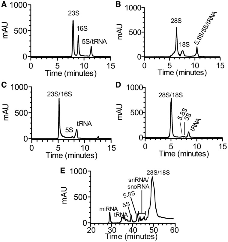 Separation of CCRF-SB and E. coli total RNA by SE-HPLC. ( A ) Typical profile of E. coli total RNA consisting of 23S, 16S rRNAs and co-eluting 5S rRNA and tRNA obtained on a Bio SEC-5 1000 Å column. ( B ) Typical profile of CCRF-SB total RNA consisting of 28S, 18S rRNAs and co-eluting 5.8S, 5S rRNA and tRNA obtained on a Bio SEC-5 1000 Å column. ( C ) Typical profile of E. coli total RNA consisting of 5S rRNA, tRNAs and co-eluting 16S and 23S rRNAs obtained on a Bio SEC-3 300 Å column. ( D ) Typical profile of CCRF-SB total RNA consisting of 5.8S, 5S rRNA, tRNAs and co-eluting 18S and 28S rRNAs obtained on a Bio SEC-3 300 Å column. The chromatograms show the analysis of 10 µg of total RNA extracted using Trizol reagent (Materials and Methods). ( E ) Separation of miRNA, tRNAs, 5.8S, 5S rRNAs, putative snRNAs and snoRNAs, and co-eluting 18S and 28S rRNAs from human lymphoblastic cell line CCRF-SB total RNA by IP RP HPLC obtained on a SOURCE 5RPC ST 4.5/150 column. The identity and purity of the RNAs collected in each fraction was validated with Bioanalyzer RNA 6000 Pico and Small RNA LabChips ( Supplementary Figures S1 and S3 ).