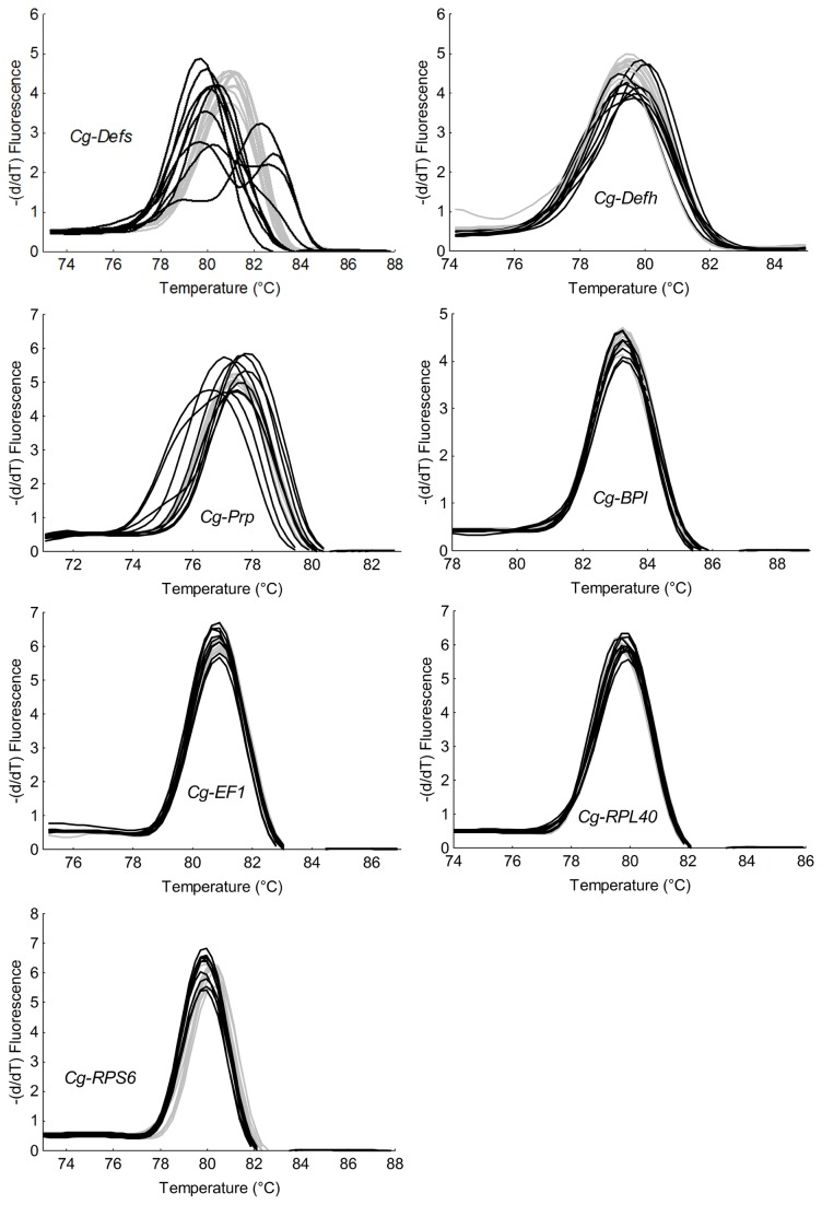 Melting temperature from transcript amplicons of four antimicrobial peptides and protein and three reference genes in individual oysters from H and L lines. Graphs represent melting curves of qPCR amplicons of three antimicrobial peptides ( Cg-Defs , Cg-Defh , and Cg-Prp ), one antimicrobial protein ( Cg-BPI ), and three constitutively expressed genes ( Cg-EF1 , Cg-RPL40 and Cg-RPS6 ) from two selected oyster lines (ten oysters per line). H oyster line is represented in grey and L oyster line in black. The three antimicrobial peptides ( Cg-Defs , Cg-Defh , and Cg-Prp ) display a high variation on their melting temperatures is significantly associated with the L line (Fisher test, p