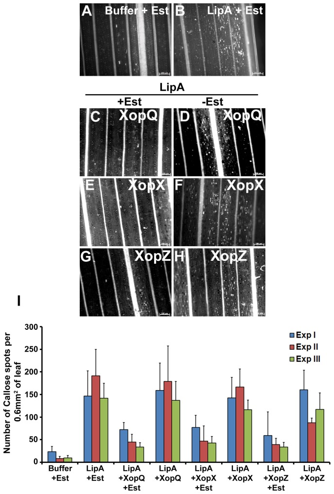 Agrobacterium mediated transient transfer of xopQ , xopX and xopZ genes of Xanthomonas oryzae pv. oryzae suppresses LipA induced callose deposition in rice leaves. Rice leaves were infiltrated with one of the following: buffer + Estradiol (Est; A ); LipA + Est ( B ); EHA105/pMDC7- xopQ + LipA with Est ( C ) or without Est ( D ); EHA105/pMDC7- xopX + LipA with Est ( E ) or without Est ( F ); EHA105/pMDC7- xopZ + LipA with Est ( G ) or without Est ( H ). The leaves were subsequently stained with aniline blue and visualized under an epifluorescence microscope. Callose deposition is seen as white spots in these pictures. Scale bar measures 100µm. ( I ) Mean and standard deviation were calculated for number of callose deposits observed in an area of 0.60 mm 2 . Data were collected from at least five leaves per treatment in each experiment (three experiments indicated as ExpI, ExpII and ExpIII) and two to three different viewing areas from the infiltrated region of each leaf. Statistically significant differences at P