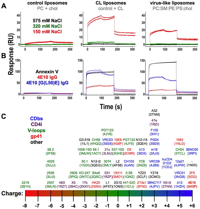 Analysis of the effects of salt concentration, mutation and overall cassette charge on 4E10/liposome interactions. Corrected SPR responses are shown for Annexin V or 4E10 IgG analytes (300 nM; duplicate runs) to liposomes incorporating biotinylated lipids captured on streptavidin-coated biosensor chips; liposome compositions are indicated above each frame. ( A ) SPR responses of wild-type 4E10 IgG analytes at different salt concentrations are plotted. ( B ) SPR responses of Annexin V (300 nM), wild-type 4E10 IgG (300 nM) or the 4E10 [G(L50)E] mutant IgG (400 nM) are plotted. A higher concentration of 4E10 mutant IgG was used with the expectation that binding might be significantly reduced. Since this did not occur, mutant IgG responses appear elevated due to the concentration differential. ( C ) The net charge at neutral pH of the Fv cassettes of the anti-HIV Abs with structures currently available through the PDB [103] was calculated with the structure-based algorithm PDB2PQ [51] – [54] . Two Abs, PG16 and NIH45-46, were excluded because their structures included modified amino acids that could not be accommodated by PDB2PQ. Fvs are plotted with their names, with assigned PDB accession codes in parentheses. Ab labels are colored by the locale of their epitopes on Env, as indicated; 4E10 is also bolded.