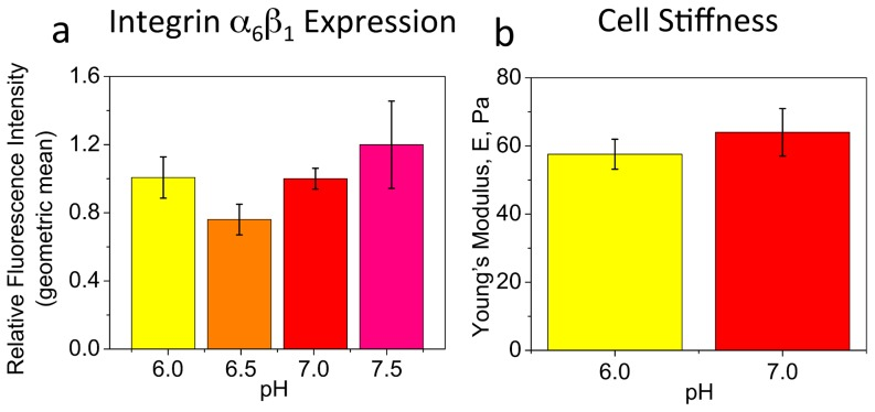 Expression of integrin α 6 β 1 and stiffness of OPCs at different pH. ( a ) Expression level of integrin α 6 β 1 at different extracellular pH, evaluated by OPC immunostaining against α 6 β 1 (with <t>Alexa</t> <t>Fluor-488</t> fluorochrome) and analysis of cell fluorescence using flow cytometry (BD LSR Fortessa). Data are geometric mean fluorescence intensities averaged over three experiments, each conducted in triplicate, and presented relative to value obtained for pH 7.0. No statistical difference was observed between any pH conditions. ( b ) Cell stiffness at pH 6.0 and 7.0, evaluated using AFM-enabled nanoindentation. Data are mean of Young's elastic modulus measured for 15 cells per condition. No statistical difference was observed between pH 6.0 and 7.0. Error bars are SEM. Colors correspond to cell media pH.