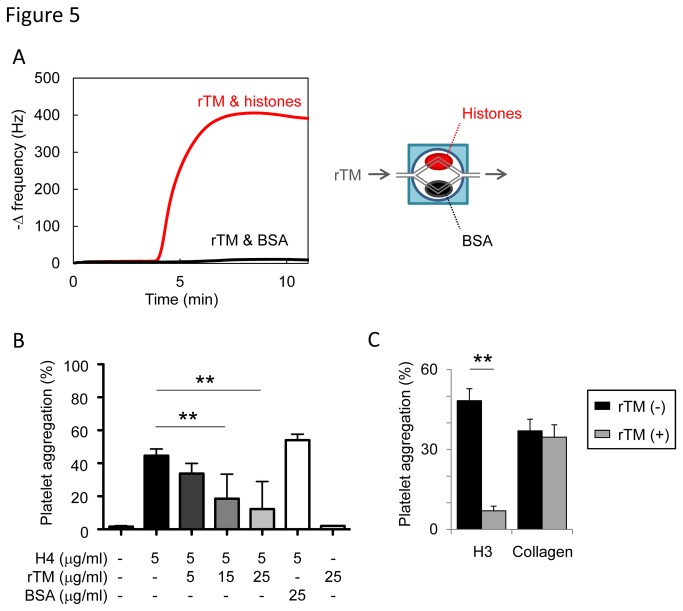 Recombinant thrombomodulin (rTM) suppresses the activity of extracellular histones. (A) Binding assays with a quartz crystal microbalance (QCM) twin sensor system. Two channels of a sensor chip were coated with either histones (1 mg/ml) or BSA (1 mg/ml). The sensor chip was placed into the NAPiCOS Auto and then perfused with rTM (1 mg/ml). The interaction between molecules was recognized as the change in frequency of a quartz crystal resonator. (B) Inhibition of histone H4-mediated platelet aggregation by rTM. Washed platelets were stimulated with histone H4 (5 µg/ml) preincubated with rTM (5-25 µg/ml) or BSA (25 µg/ml). rTM, but not BSA, inhibited histone-induced platelet aggregation (n = 3-7 per group, mean ± S.D.). (C) Inhibition of histone H3-induced platelet aggregation by rTM. Washed platelets were stimulated with histone H3 (25 µg/ml) or collagen (1.44 µg/ml) in the presence or absence of rTM (15 µg/ml). rTM inhibited histone-induced platelet aggregation, but not collagen-induced platelet aggregation. Representative data of three independent experiments are shown. ** P