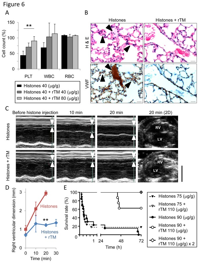 Recombinant thrombomodulin (rTM) protects mice against histone-induced fatal thrombosis. (A) The protective effect of rTM on histone-induced thrombocytopenia. Pretreatment with rTM (40 or 80 µg/g) 30 min before histone injection (40 µg/g) prevented histone-induced thrombocytopenia in mice (n = 3-4 per group, mean ± S.D.). ** P
