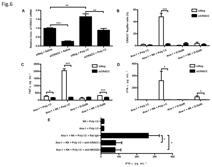 CRACC-CRACC interaction between macrophages and NK cells enhances the cytokine secretion in vitro. A , Ana-1 cells pre-transfected with liposome encapsulated siNeg or siCRACC was subsequently stimulated with Poly I:C. The expression of CRACC mRNA was assayed by quantitative PCR at 3h time point post the Poly I:C stimulation. B , C D , Ana-1 cells pre-transfected with nanoparticle encapsulated siNeg or siCRACC was cultured in absence or presence of NK cells, which were freshly isolated from mice pre-treated by Poly I:C. Then Ana-1 cells cultured with or without NK cells were stimulated with Poly I:C; and D-GalN was made as control. CRACC expression on Ana-1 cells was analyzed by flow cytometry ( B ) and the cytokine (TNF-α and IFN-γ) in the culture supernatant was assayed by ELISA ( C , D ) at 24h time point post the Poly I:C or D-GalN stimulation; Ana-1 cells were identified as F4/80 + cells. E , Ana-1 cells were cocultured with freshly isolated NK cells from mice pre-treated by Poly I:C; and Ana-1 cells alone or NK cells alone were made as control. The Ana-1-NK coculture was stimulated by Poly I:C in the presence of isotype control Ab (Rat IgG), CRACC mAb (anti-CRACC), or NKG2D mAb (anti-NKG2D), respectively. The IFN-γ in culture supernatant was assayed by ELISA at 24h time point post the Poly I:C stimulation. *P