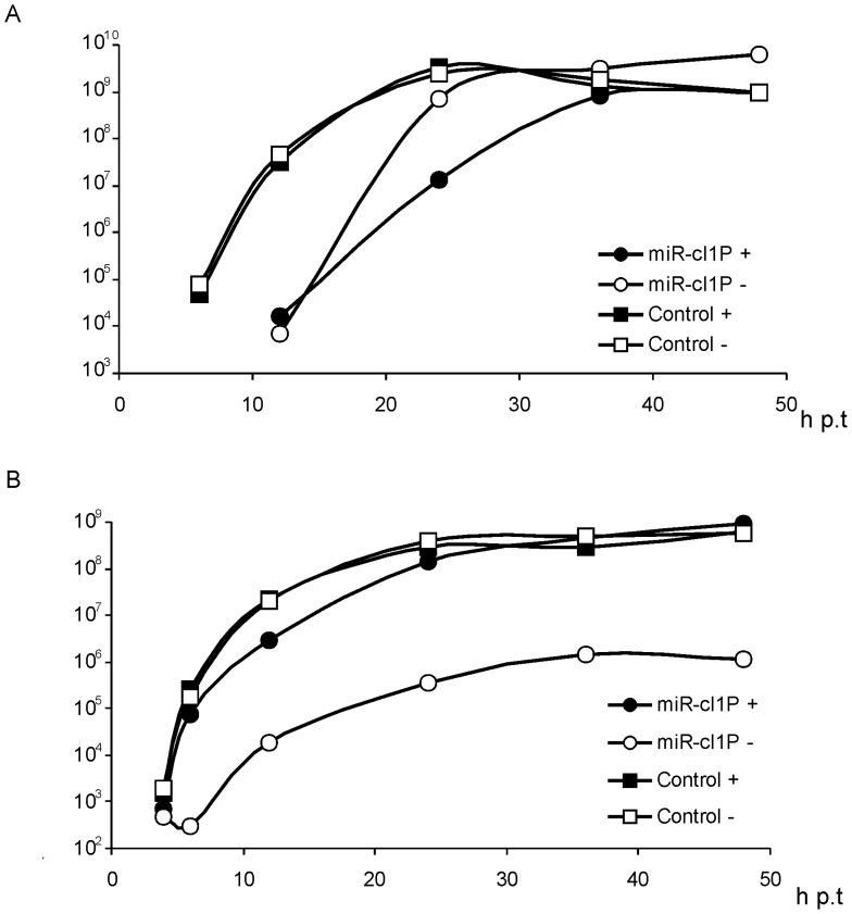 """Effects of miRNA inhibitors on the rescue, multiplication and Gluc expression of recombinant vectors. BHK-21 cells were electroporated with 1 µg pCMV-SFV4-2SG-Gluc (Control) or pCMV-SFV4-2SG-Gluc-miR-cl1P (miR-cl1P) in the presence of 2-0-Met-RNA oligonucleotides complementary to Let-7 , miR-17 and miR-19 (300 pmol of each; indicated with black symbols and """"+"""") or in the presence of 900 pmol irrelevant control oligonucleotide (indicated with open symbols and """"−""""). Titres of rescued viruses and Gluc activity in growth media were monitored up to 48 h p.t. (horizontal axes). (A) Titres of rescued recombinant viruses. Vertical axes represent the virus titre (pfu/ml) in the growth medium. (B) Expression of Gluc by recombinant viruses. Vertical axes represent the Gluc activity (in relative luciferase activity units) in the growth medium. Representative data from one from three reproducible experiments is shown in each panel."""