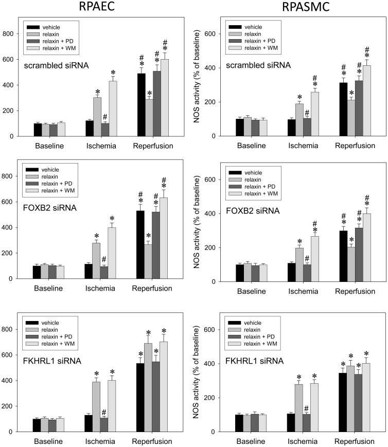 FKHRL1 is essential for relaxin signaling towards iNOS. Primary rat pulmonary artery endothelial cells (RPAEC, left side) and rat pulmonary artery smooth muscle cells (RPASMC, right side) were processed at baseline, after 90 min hypoxia (5% oxygen), or after another 90 min of normoxia (n = 5 each) in order to determine iNOS activity. Experiments were carried out in the presence of vehicle (control), 5 nM of relaxin, the ERK-1/2 inhibitor PD-98059 (PD) (50 µmol/l), the PI3K inhibitor wortmannin (WM) (100 nM), and combinations thereof. Prior to experiments, cells had been transfected with scrambled siRNA (control), FOXB2 siRNA, or FKHRL1 siRNA. While both transfection with scrambled siRNA and knock-down of non-related forkhead factor, FOXB2, had no influence knock-down of FKHRL-1 abolished the susceptibility of relaxin's effect towards PI3K inhibition in ischemia and equalized the extent of iNOS induction in reperfusion. P