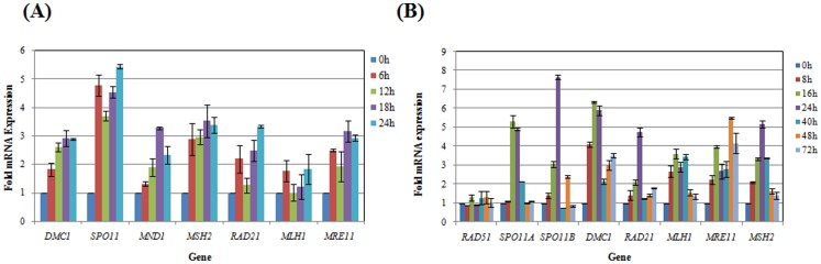 Expression of meiotic and HR specific genes during serum starvation in E. histolytica and encystation in E. invadens . (A) Real Time PCR analysis in E. histolytica . Total RNA was extracted at different time points (0, 6, 12, 18 and 24 h) during serum starvation using TRIZOL reagent ( Invitro gen). cDNA was prepared by using Superscript III reverse transcriptase and qRT-PCR was performed with SYBR Green dye as a probe. 18S rDNA was used for normalization. The relative mRNA levels were expressed against those of trophozoites as 1. (B) Real Time PCR analysis in E. invadens . Total RNA was extracted at different time points (0, 8, 16, 24, 40, 48, and 72 h) during encystation and qRT-PCR was performed. mRNA levels of each gene were expressed relative to 0 h (beginning of encystation), shown in the bar graph. Size of all genes was checked by northern blotting (data not shown) by using appropriate probe, amplified by gene specific primers (Table S1in file S1 ). SPO11 , DMC1 and MND1 are meiotic specific genes.