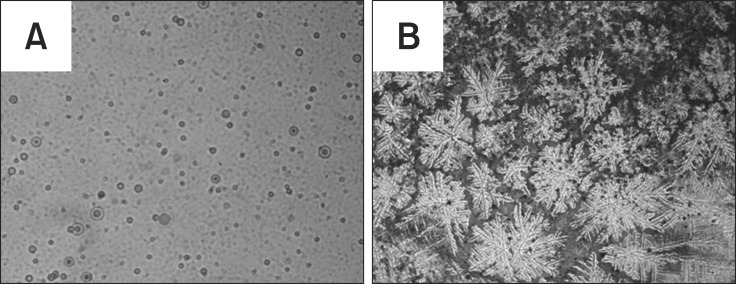Agglutination on slides with F18+ polyclonal serum. (A) Total protein extracted from wild-type seeds. (B) Total protein extracted from F18+ seeds.