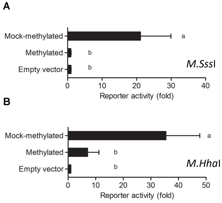 In vitro methylation silences Foxl2 promoter reporter activity in NIH3T3 cells. The -432/+7 murine Foxl2 -luciferase reporter in pCpGL-Basic was treated in vitro with A) M . <t>Sss</t> I or B) M. <t>Hha</t> I. Mock methylated plasmid was exposed to the identical treatment but without enzyme. Plasmids were transfected in triplicate into NIH3T3 cells. For A (n=6) and B (n=4), the data reflect the means of independent experiments (+SEM) and are presented with empty vector activity set to 1. Data were analyzed by one-way ANOVA followed by Tukey post-hoc tests. Bars with different letters were statistically different, whereas those sharing letters did not differ.