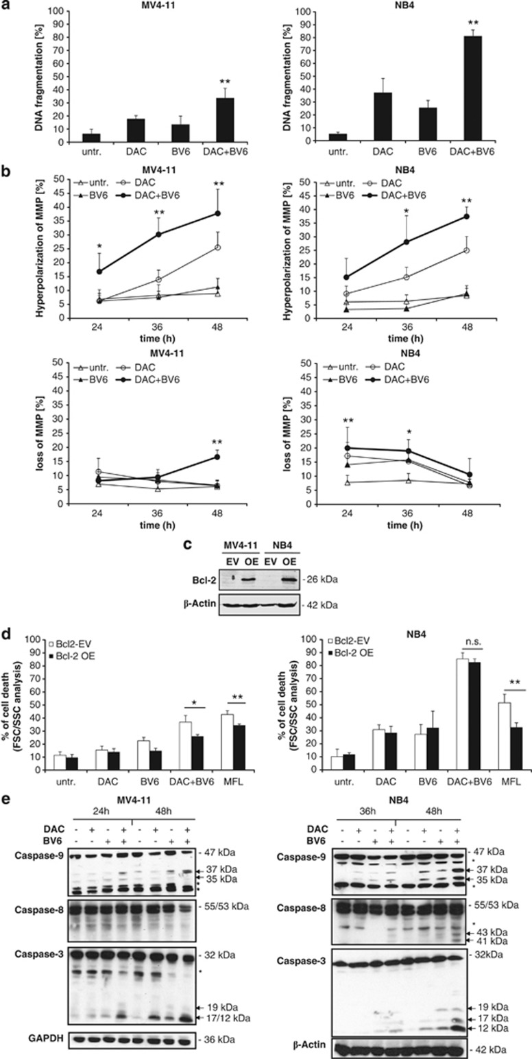 BV6 and DAC cooperate to trigger caspase activation, mitochondrial perturbations and DNA fragmentation. ( a ) MV4-11 and NB4 cells were treated for 72 h with indicated concentrations of BV6 and/or DAC (MV4-11: 600 nM BV6, 30 nM DAC; NB4: 100 nM BV6, 50 nM DAC). Apoptosis was determined by fluorescence-activated cell sorting analysis of DNA fragmentation of PI-stained nuclei. Mean and SD of three experiments performed in triplicate are shown. * P