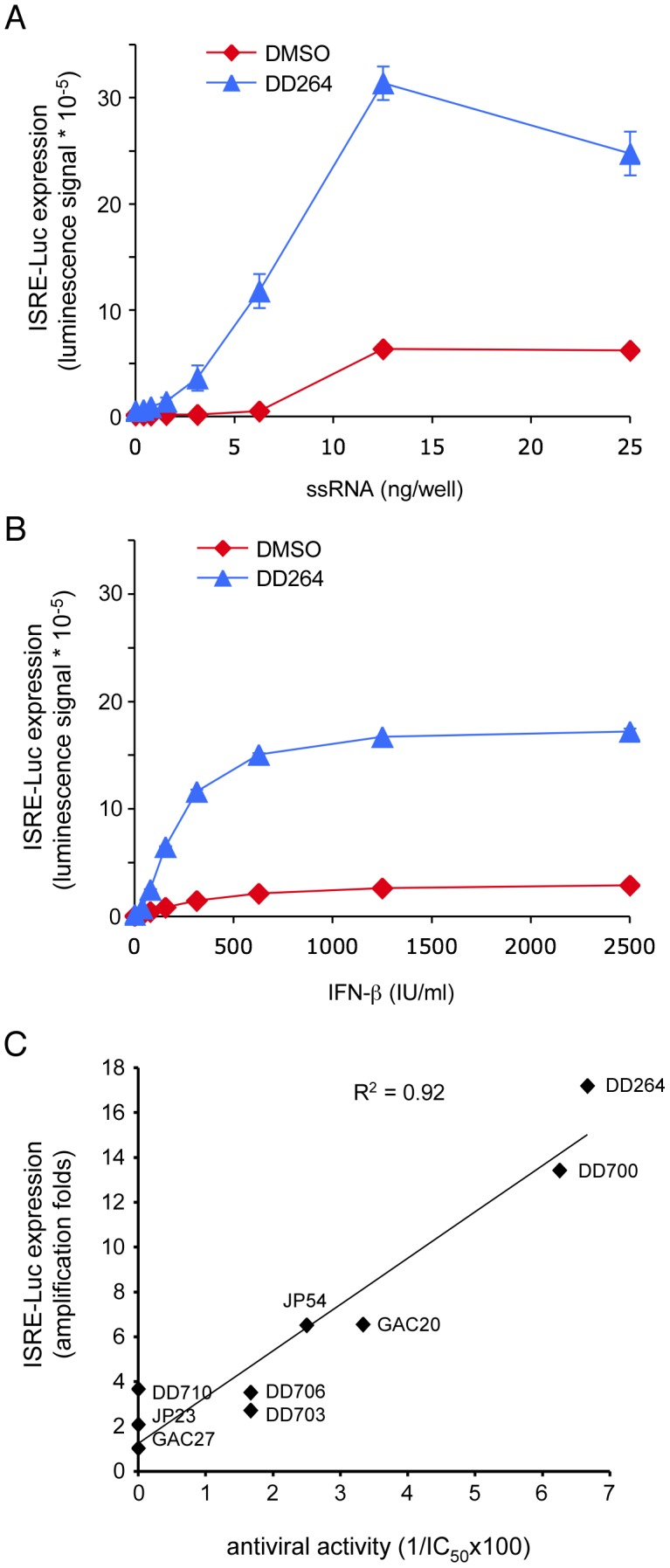 DD264 amplifies cellular response to transfection of PAMP-like ssRNA molecules or IFN-β stimulation, and this correlates with its antiviral activity. ( A ) HEK-293 cells with the ISRE-luciferase reporter gene (STING-37 cells) were transfected with increasing doses of synthetic 5′-triphosphate RNA molecules (ssRNA), and incubated in the presence of DD264 (80 µM) or DMSO alone in 96-well cultures plates. After 24 hours, luciferase expression was determined. ( B ) HEK-293 cells with the ISRE-luciferase reporter gene (STING-37 cells) were transfected with increasing doses of recombinant IFN-β, and incubated in the presence of DD264 (80 µM) or DMSO alone in 96-well culture plates. After 24 hours, luciferase expression was determined. Experiments (A) and (B) were performed in duplicate, and data represent means ± SD. ( C ) Eight molecules were randomly picked among analogs of DD264 (see Table S2 ) to build a set of compounds with a range of antiviral activities from null to high as determined by their potency to inhibit MV-Luc replication. Then, the selected molecules were tested for the amplification ISRE-luciferase expression when stimulating cells with suboptimal doses of ssRNA (6 ng/well) as described in (A). Finally, for DD264 and selected analogs, the capacity to amplify cellular response to ssRNA was plotted as a function of the antiviral activity by means of the experimental IC 50 values (antiviral activity = 1/IC 50 *100).