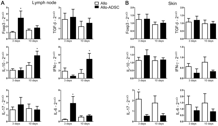ADSC change the cytokine milieu in vivo and block Th-17 responses. C57BL/6 mice were grafted with full thickness allogeneic tail skin from CBA/J mice and treated or not with donor (CBA/J) ADSC. Tissues were analyzed on days 3 and 10 after transplantation. RNA was isolated from (A) draining axillary lymph nodes and (B) skin. Gene expression of Foxp3, TGF-β, IL-10, IFN-γ, IL-17 and IL-6 was assessed by quantitative RT-PCR. Samples were normalized by expression of an endogenous housekeeping gene (HPRT). Data are represented as mean ± SEM; n = 3 independent experiments done in triplicate, leading to a total of ≥10 independent values for each point. *P