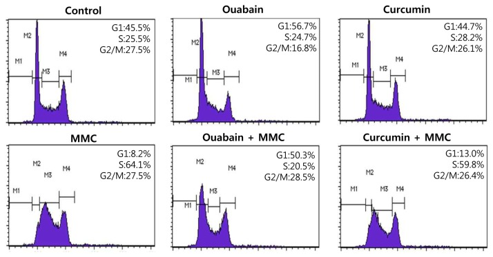 Ouabain disturbed MMC-induced S phase arrest. U2OS cells were pretreated with 50 nM ouabain or 5 µM curcumin for 1 h and then incubated with 200 ng/ml MMC for 24 h. After incubation, the cells were fixed, stained with propidium iodide, and subjected to flow cytometric DNA content analysis. Representative DNA content profiles from three independent experiments are shown.