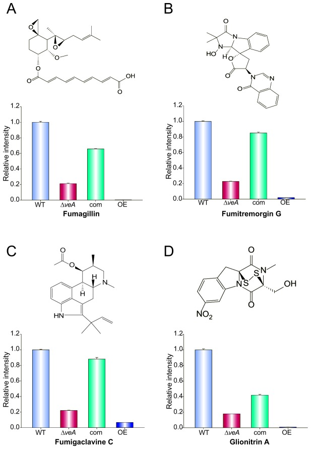 veA regulates the production of fumagillin, fumitremorgin G, fumigaclavine C and Glionitrin A. Secondary metabolites were extracted from 120 h old Czapek-dox stationary liquid cultures of wild type (WT), Δ veA , complementation and OE veA strains. Extracts were analyzed with Shimadzu <t>2010</t> EV LC-MS as described in the materials and methods section. The predicted m/z [M+H] + ratio was (A) fumagillin (m/z=459), (B) fumitremorgin G (m/z = 433) (C) fumigaclavine C (m/z = 299) and (D) Glionitrin-A (m/z = 354). The bars represent the mean of three samples and error bars represent standard error.